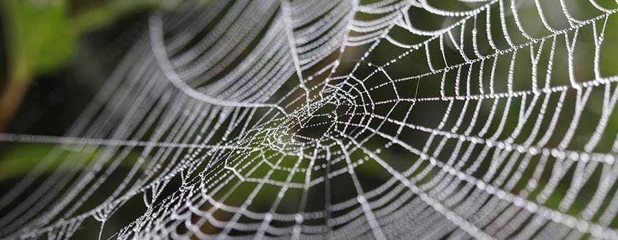 intricately connected spider web